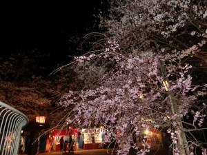 201104打吹夜桜②