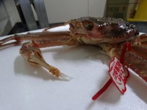 タグ付き蟹